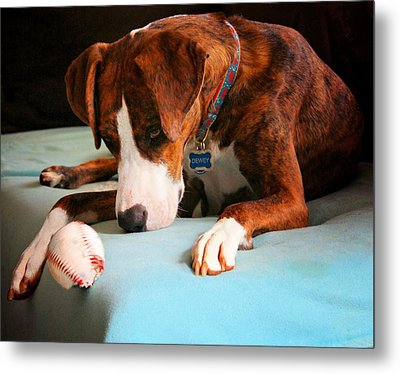 Metal Print featuring the photograph Wait For It      Wait For It by Robert McCubbin