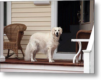 Waiting By The Door For You Metal Print by John Rizzuto