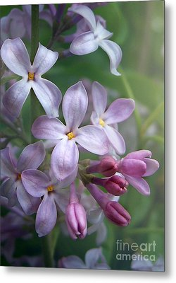 Waiting For Lilacs Metal Print