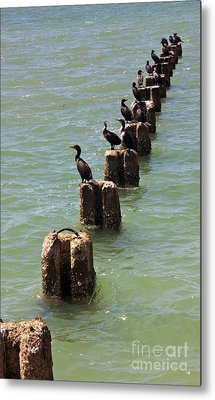 Waiting For Lunch To Arrive At The Sushi Bar Metal Print