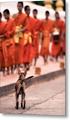 Metal Print featuring the photograph Waiting For Master by Justin Albrecht