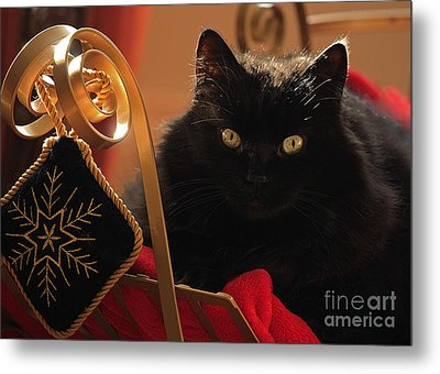 Waiting For Santa To Arrive Metal Print by Inspired Nature Photography Fine Art Photography