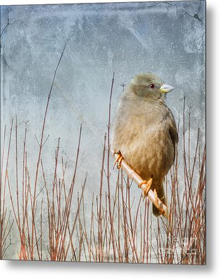 Waiting For Spring Metal Print by Elaine Manley