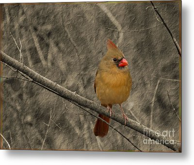 Waiting For Supper Metal Print