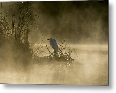 Metal Print featuring the photograph Waiting For The Sun by Steven Sparks