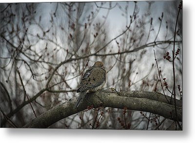Metal Print featuring the photograph Waiting On Spring by Phil Abrams