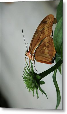 Butterfly Waiting On The Wind  Metal Print