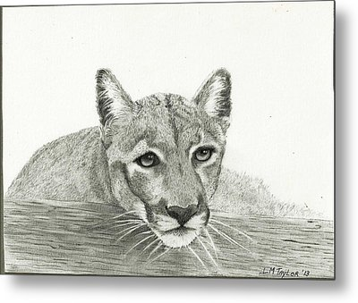 Waiting Patiently Metal Print by Linda Taylor