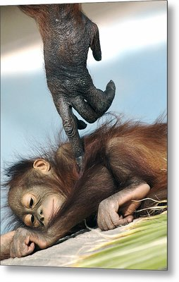 Wakeup Little One Metal Print by Sue Cullumber
