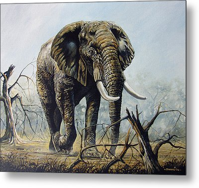 Walk About Metal Print by Anthony Mwangi