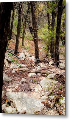 Walk In The Woods Metal Print by Barbara Shallue