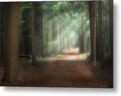 Walk In The Woods Metal Print by Bill Wakeley