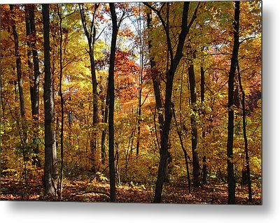 Metal Print featuring the photograph Walk In The Woods by Harold Rau
