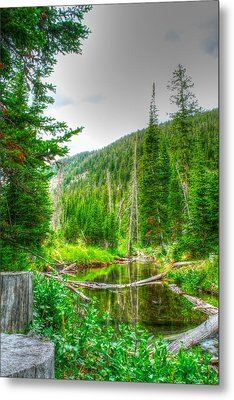 Metal Print featuring the photograph Walk In The Woods by Kevin Bone