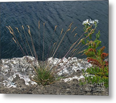 Metal Print featuring the photograph Flowers In Rock by Brenda Brown