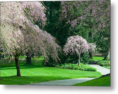 Walk Under The Cherry Blossoms Metal Print by Sabine Edrissi