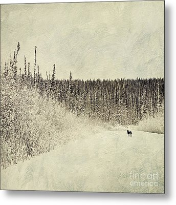 Walking Luna Metal Print