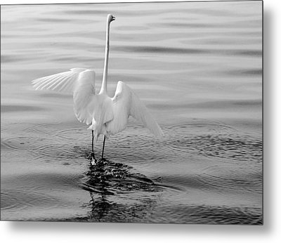 Metal Print featuring the photograph Walking On Water by Daniel Woodrum