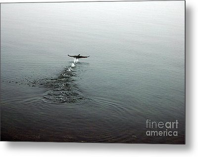 Metal Print featuring the photograph Walking On Water by Randi Grace Nilsberg