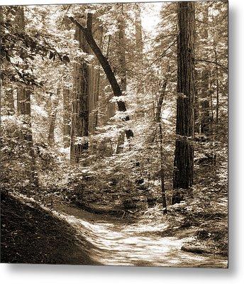 Walking Through The Redwoods Metal Print by Mike McGlothlen