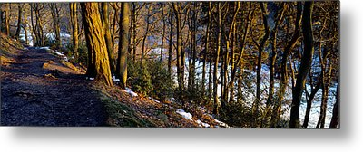 Walkway Passing Through The Forest Metal Print