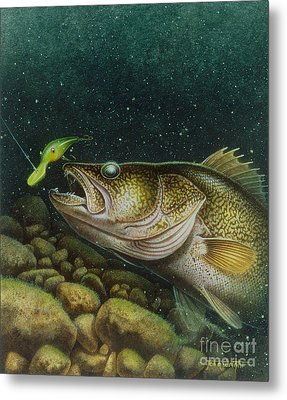 Walleye And Crank Bait Metal Print by Jon Q Wright