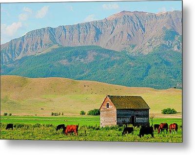 Wallowa Mountains And Barn In Field Metal Print by Nik Wheeler