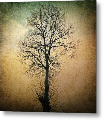 Waltz Of A Tree Metal Print by Taylan Apukovska