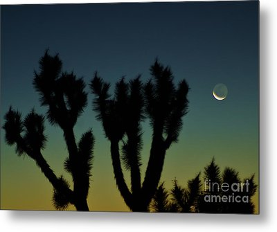 Metal Print featuring the photograph Waning by Angela J Wright