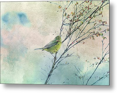 Warbler In A Huckleberry Bush Metal Print by Peggy Collins
