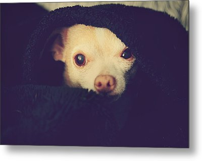 Warm And Cozy Metal Print by Laurie Search