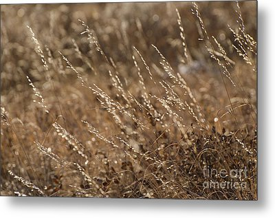 Warm Light On A Winter's Day Metal Print by Dee Cresswell