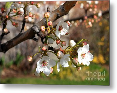 Warm Spring Canvas Metal Print