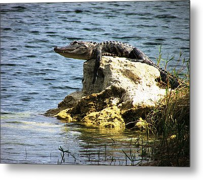Warming Metal Print by Will Boutin Photos