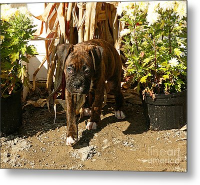 Metal Print featuring the photograph Was I Bad? by Carol Lynn Coronios