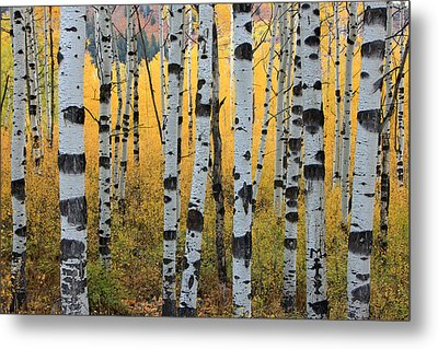 Wasatch Aspens Metal Print by Johnny Adolphson