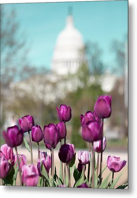 Washington Dc Metal Print by Kim Fearheiley