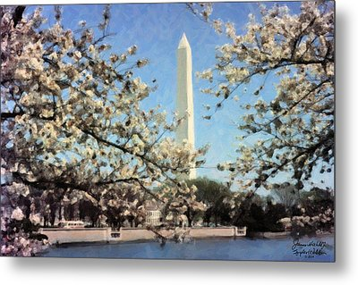Washington Monument Cherry Blossoms Metal Print by Spyder Webb