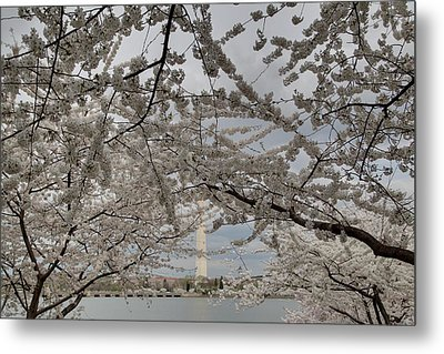 Washington Monument - Cherry Blossoms - Washington Dc - 011323 Metal Print by DC Photographer