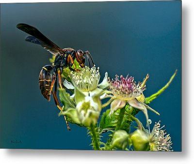 Wasp Metal Print by Bob Orsillo