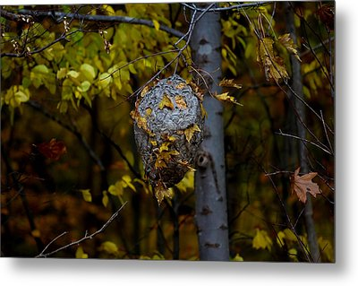 Wasp's Nest Metal Print by Jerome Lynch