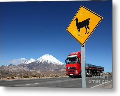 Watch Out For Llamas Metal Print by James Brunker