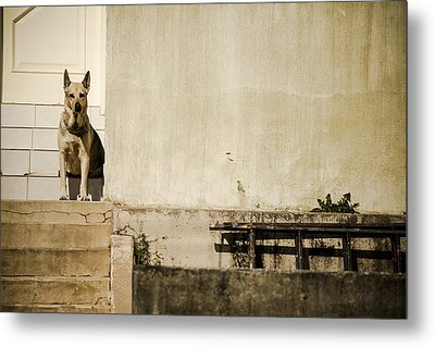 Watchdog Metal Print by Luciano Trevisan