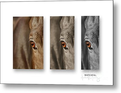 Watchful Triptych Metal Print