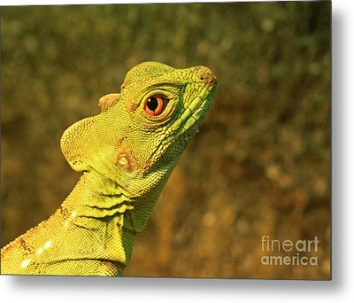 Watchful Eye Of The Green Basilisk Lizard  Metal Print by Inspired Nature Photography Fine Art Photography