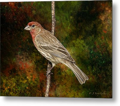 Metal Print featuring the digital art Watchful House Finch by J Larry Walker