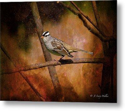 Watchful White-crowned Sparrow Metal Print