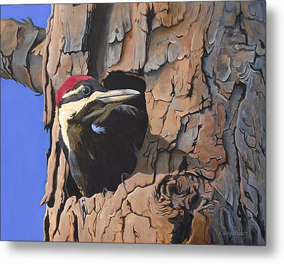 Watchful Woodpecker Metal Print by Kirsten Wahlquist