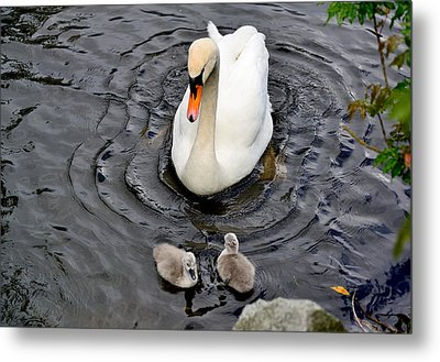 Watching Closely Metal Print by Kathy King