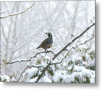 Watching Over The Flock Metal Print